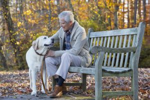 619-07558623 © Masterfile Royalty-Free Model Release: Yes Property Release: Yes Senior Caucasian man petting dog on park bench